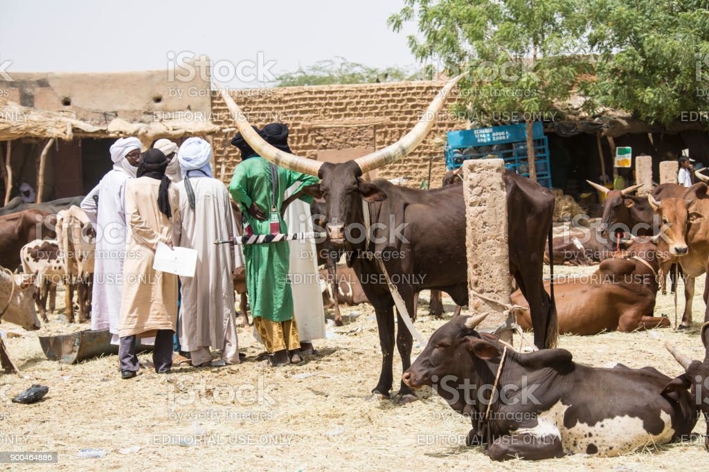 Animal market in Agadez Niger stock photo