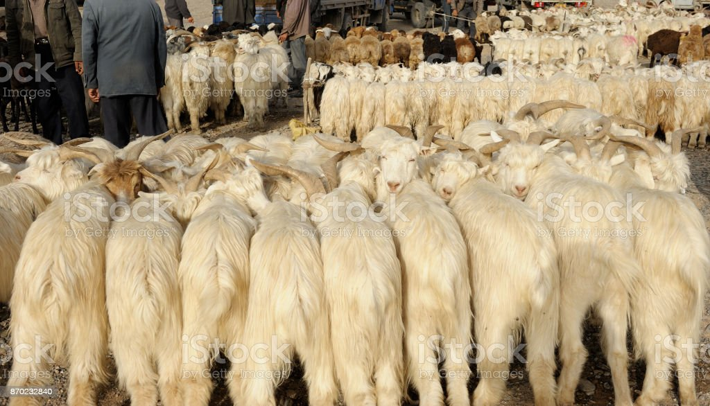 Animal market in Kashgar stock photo