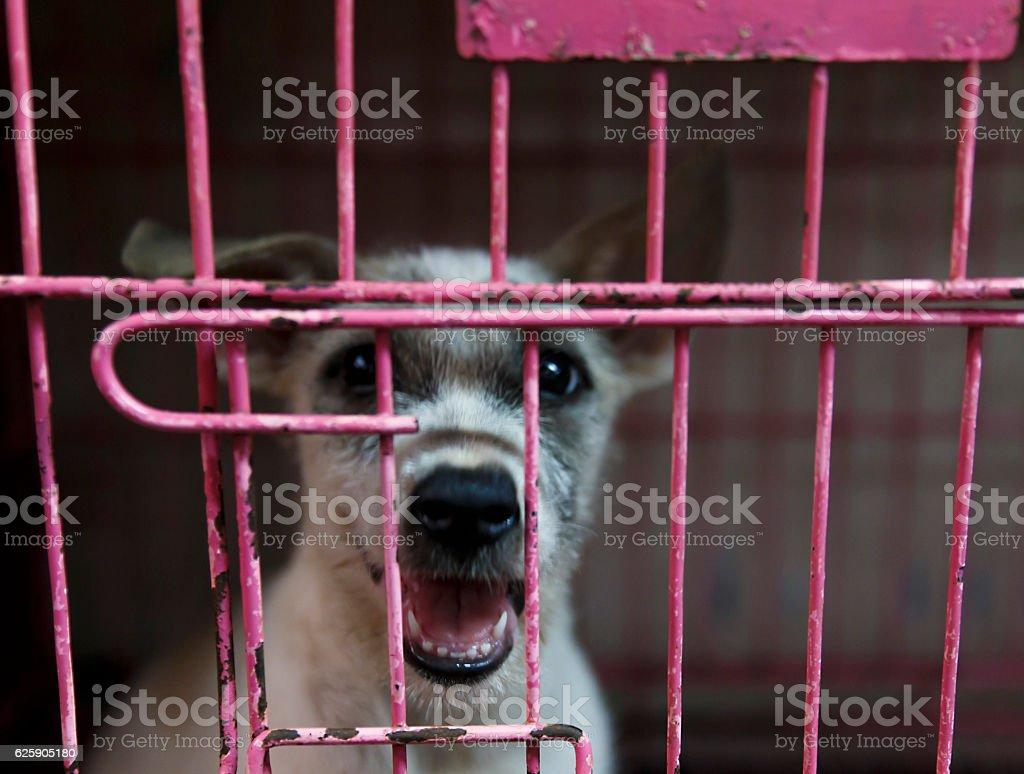 animal market-manila stock photo