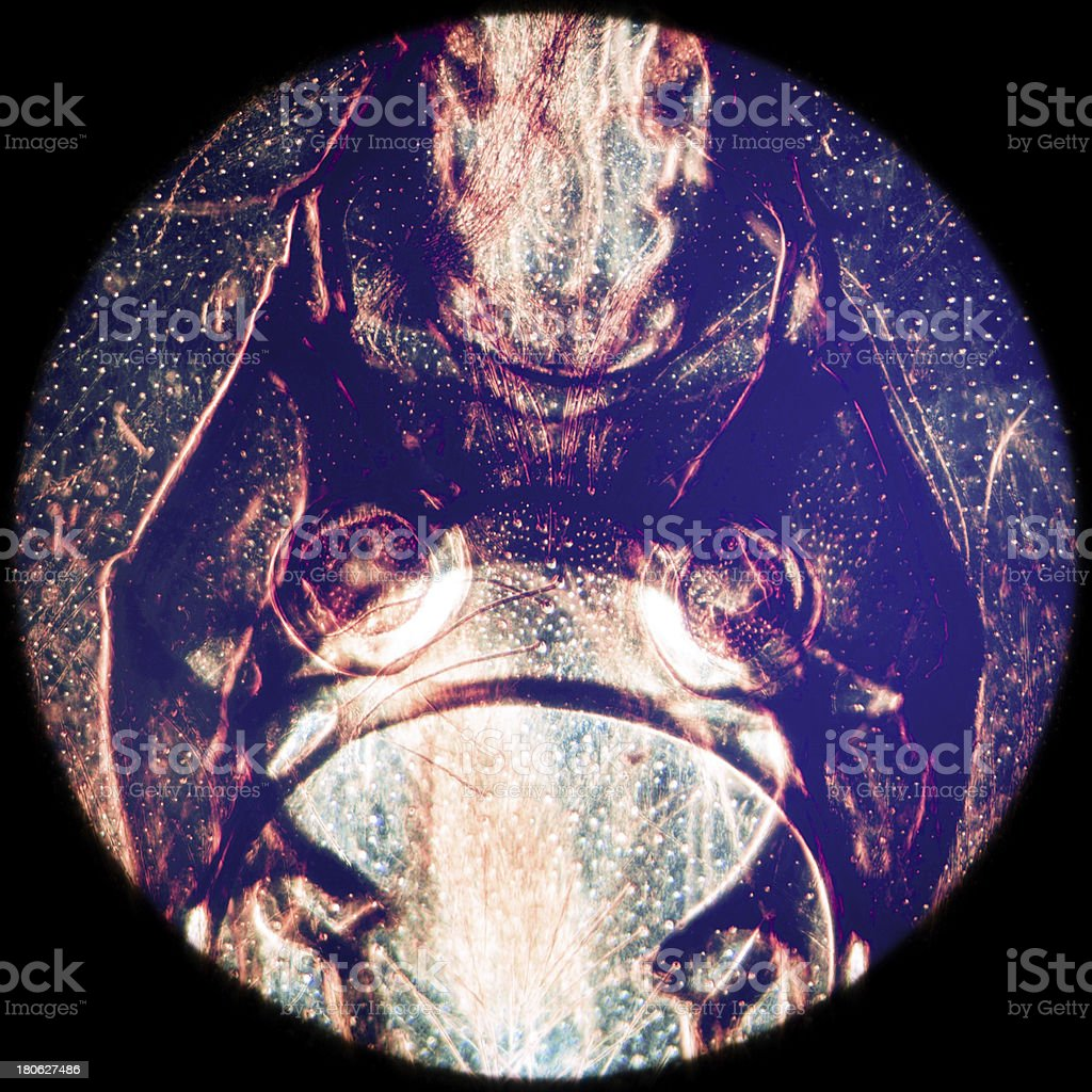 animal mouth-parts of bee insect royalty-free stock photo