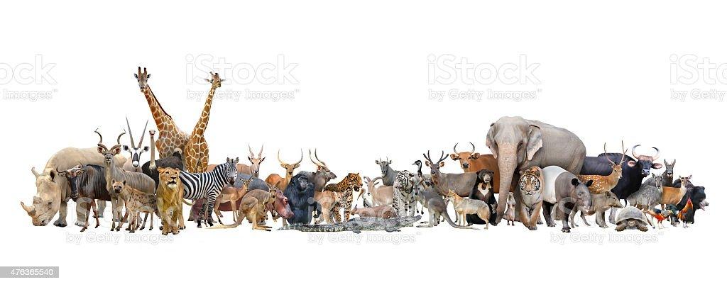 animal of the world isolated on white background