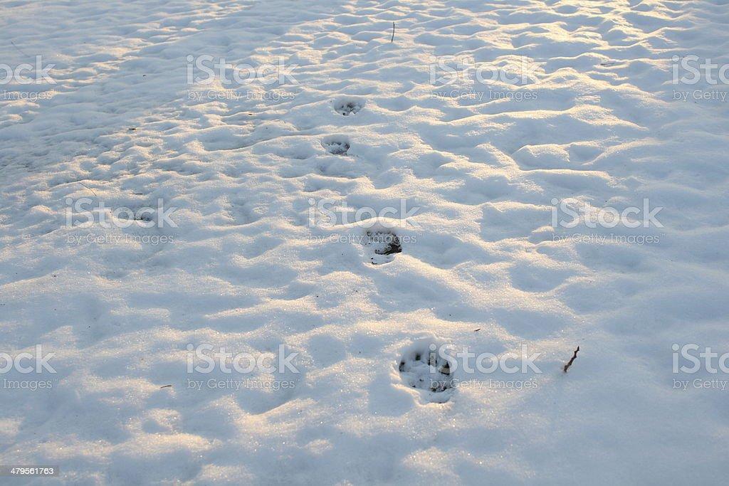 animal paw prints stock photo
