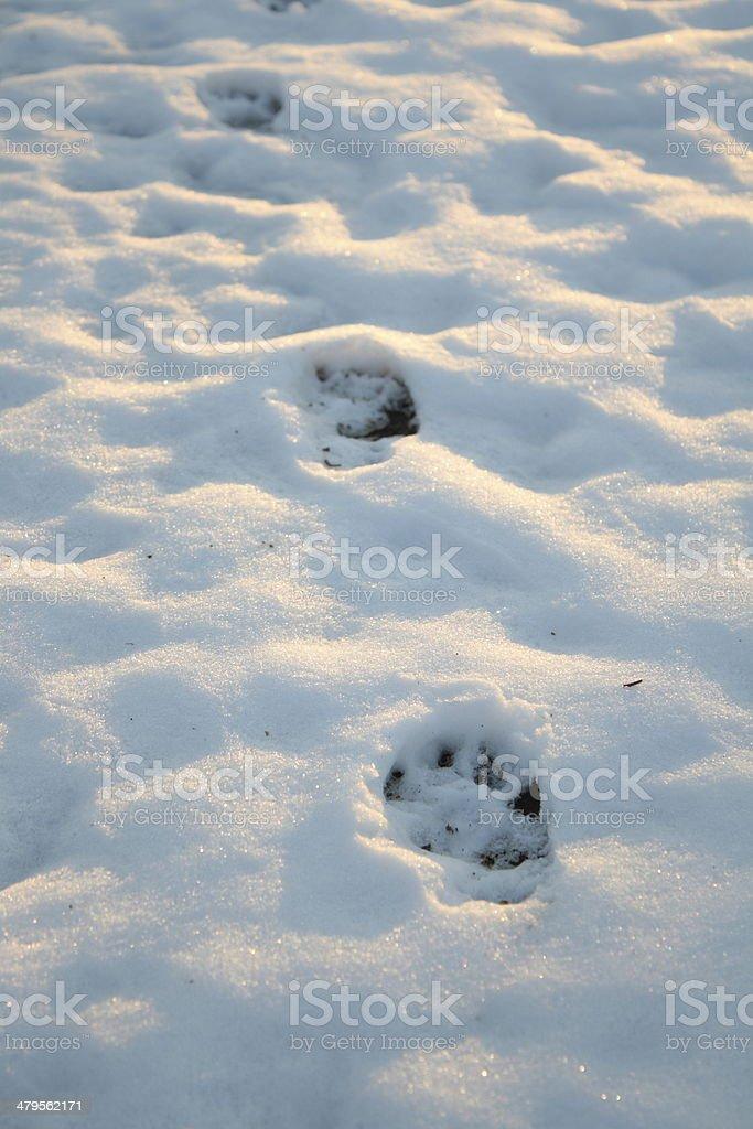 animal paw prints royalty-free stock photo