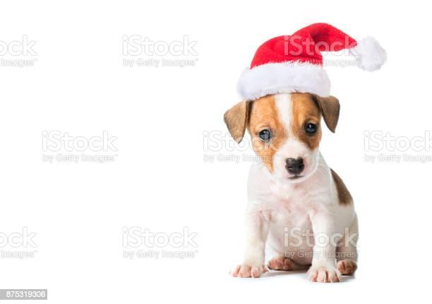 Animal pet dog picture id875319306?b=1&k=6&m=875319306&s=612x612&h=x mtpxqgif9s hhyphnydxc z9bwixnow w7nedtafu=