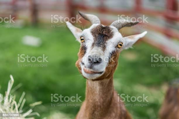 Animal photos picture id834732994?b=1&k=6&m=834732994&s=612x612&h=wgkl txjetoqbxuxbjoml4nttuypuc0sronbrt1josk=