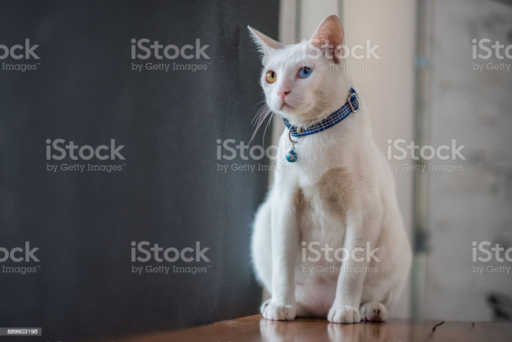 Animal Photos stock photo