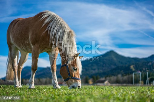 Horse Grazing On A Green Meadow