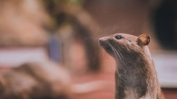 Tierische Fotos – Foto