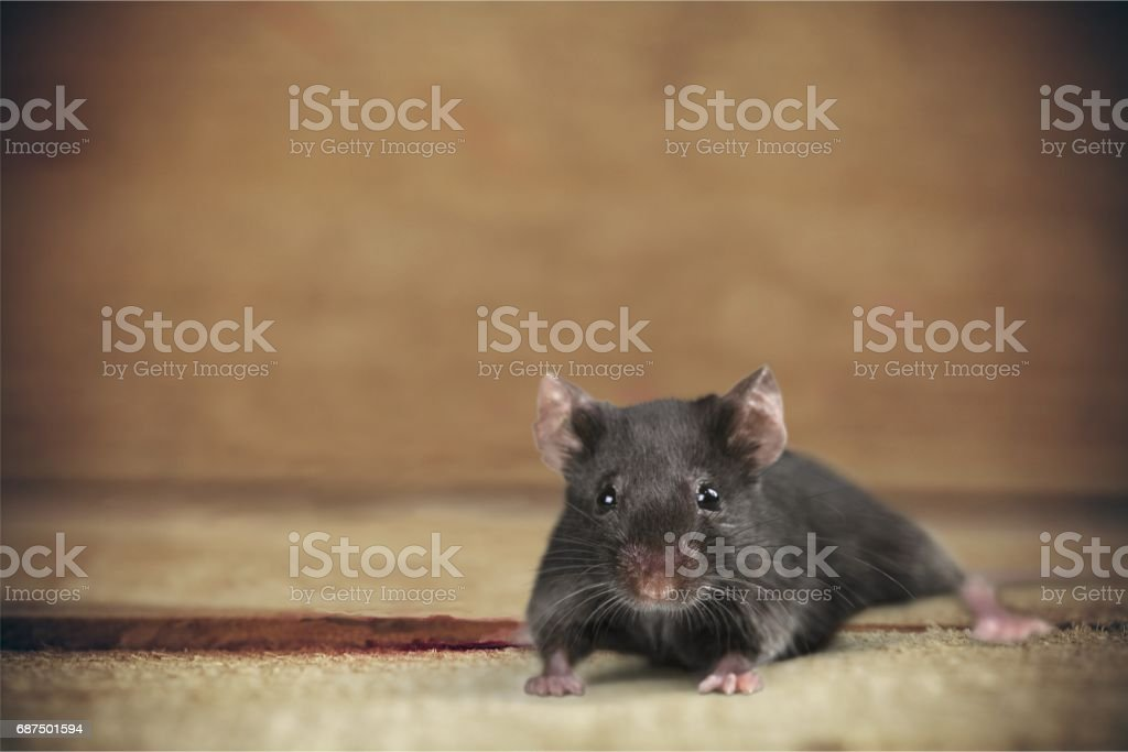 Animal. stock photo