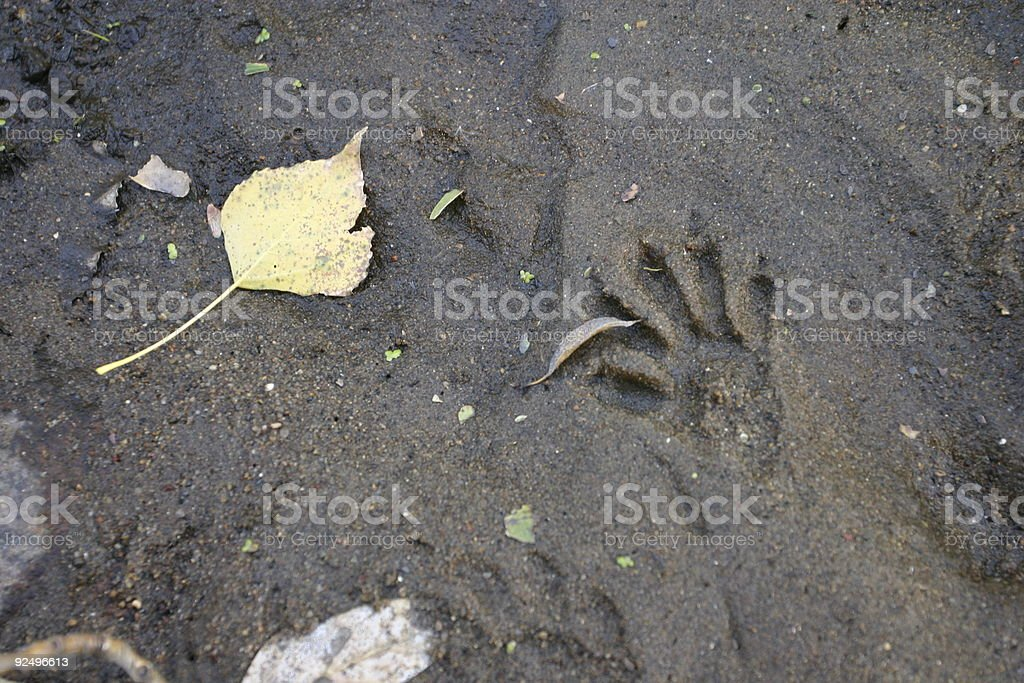 Animal Print in River Bed royalty-free stock photo