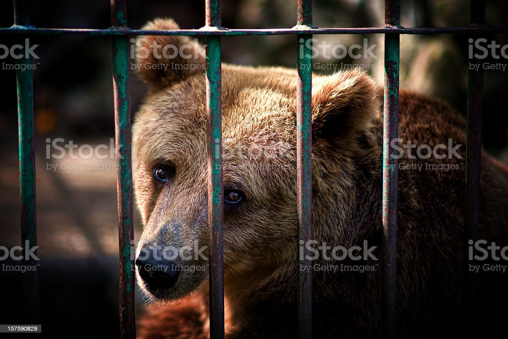 Animal Prison stock photo