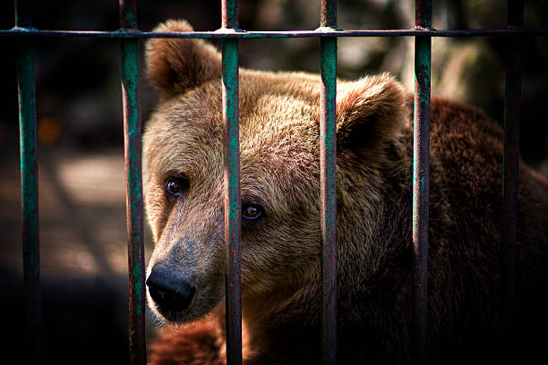 animal prison - animals in captivity stock pictures, royalty-free photos & images