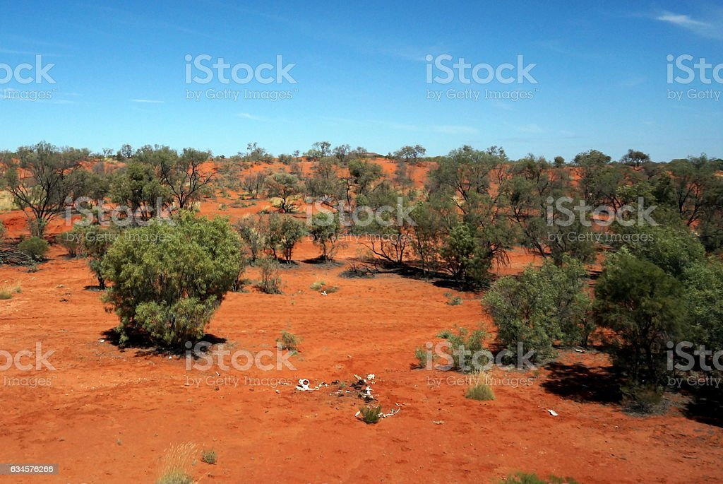 Animal rests in the outback stock photo