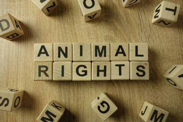 Animal rights text from wooden blocks Animal rights text from wooden blocks on desk poaching animal welfare stock pictures, royalty-free photos & images