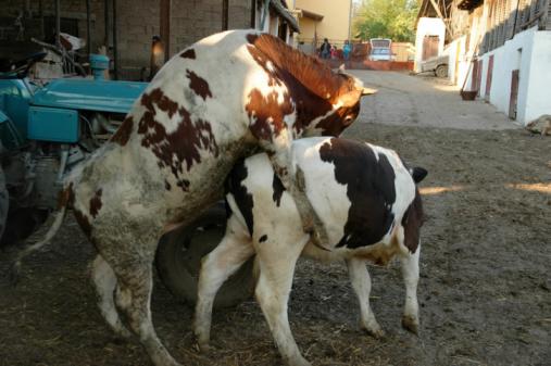 Tier Sex Stockfoto und mehr Bilder von Agrarbetrieb - iStock