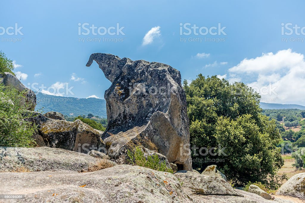 Animal shaped strange rock formations in Corsica - 4 royaltyfri bildbanksbilder