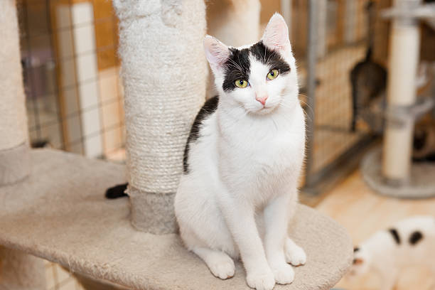 Animal shelter cat picture id477749730?b=1&k=6&m=477749730&s=612x612&w=0&h=ndeos7z3nlet6xdicc3yal12qtohafjrckzp0tvyape=