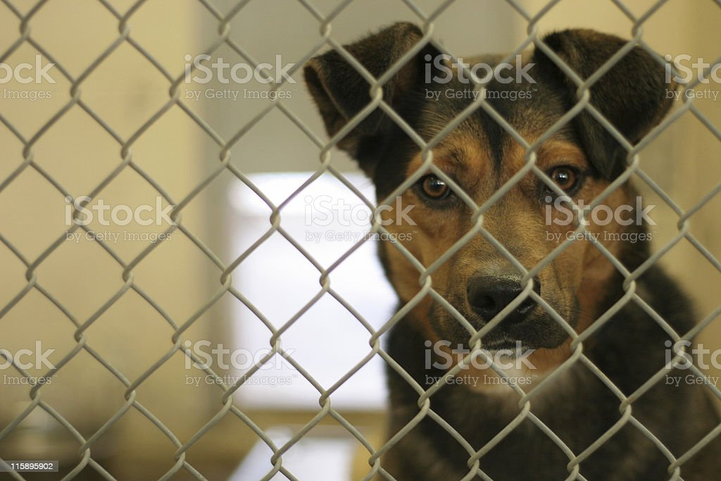 Animal Shelter Facesan stock photo