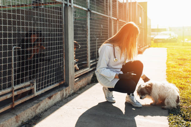 Animal shelter Veterinarians at animal shelter checking health of dogs. sheltering stock pictures, royalty-free photos & images