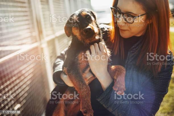 Animal shelter picture id1172155138?b=1&k=6&m=1172155138&s=612x612&h=e672hu1j5ybnwbwgcpc kkmbkcmwj2okngsr2vvynf0=