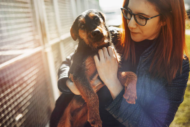 Animal shelter Young woman in dog shelter. rescue stock pictures, royalty-free photos & images