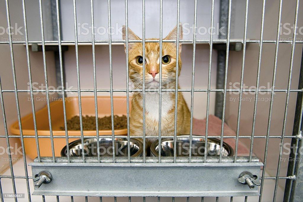 Animal shelter stock photo