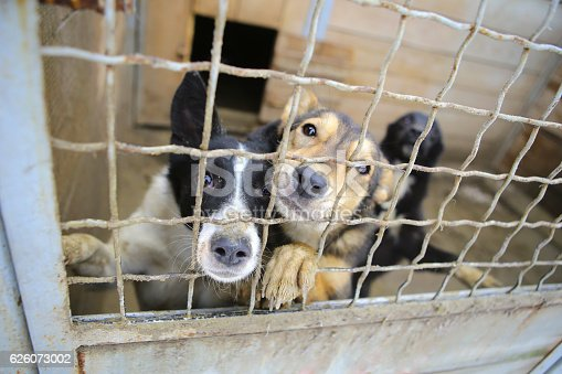 istock Animal shelter.Boarding home for dogs 626073002