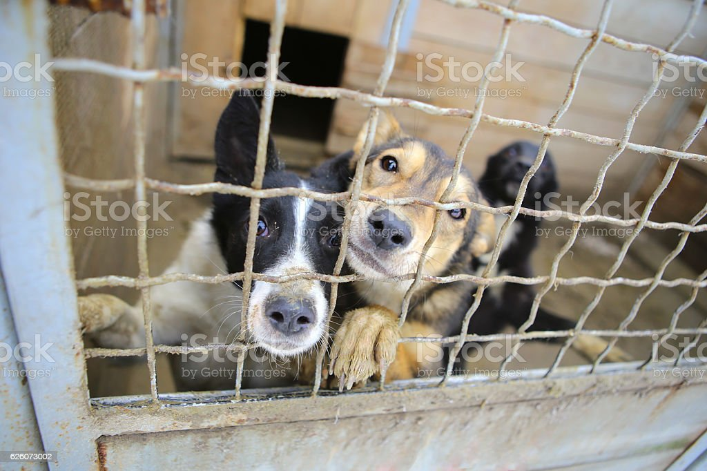 Animal shelter.Boarding home for dogs stock photo