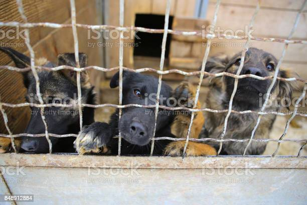 Animal shelterboarding home for dogs picture id848912884?b=1&k=6&m=848912884&s=612x612&h=8ugnq1bdxmrjdp985 n07n1itj5jlluyq6rnkcf5gzi=