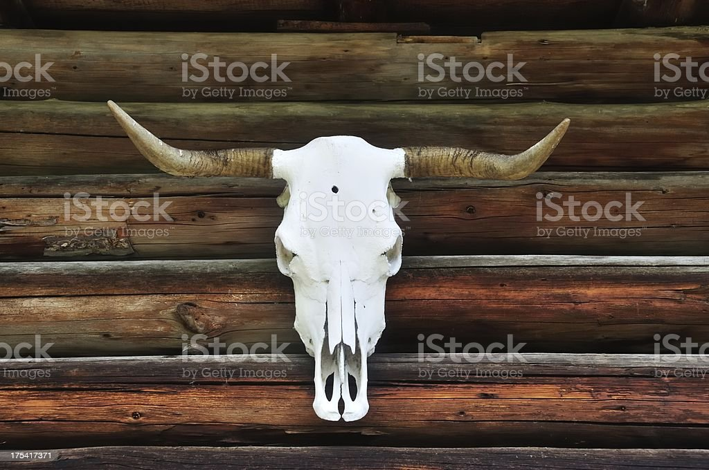 Animal Skeleton royalty-free stock photo