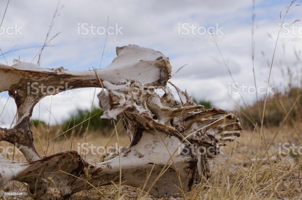 animal skeleton stock photo