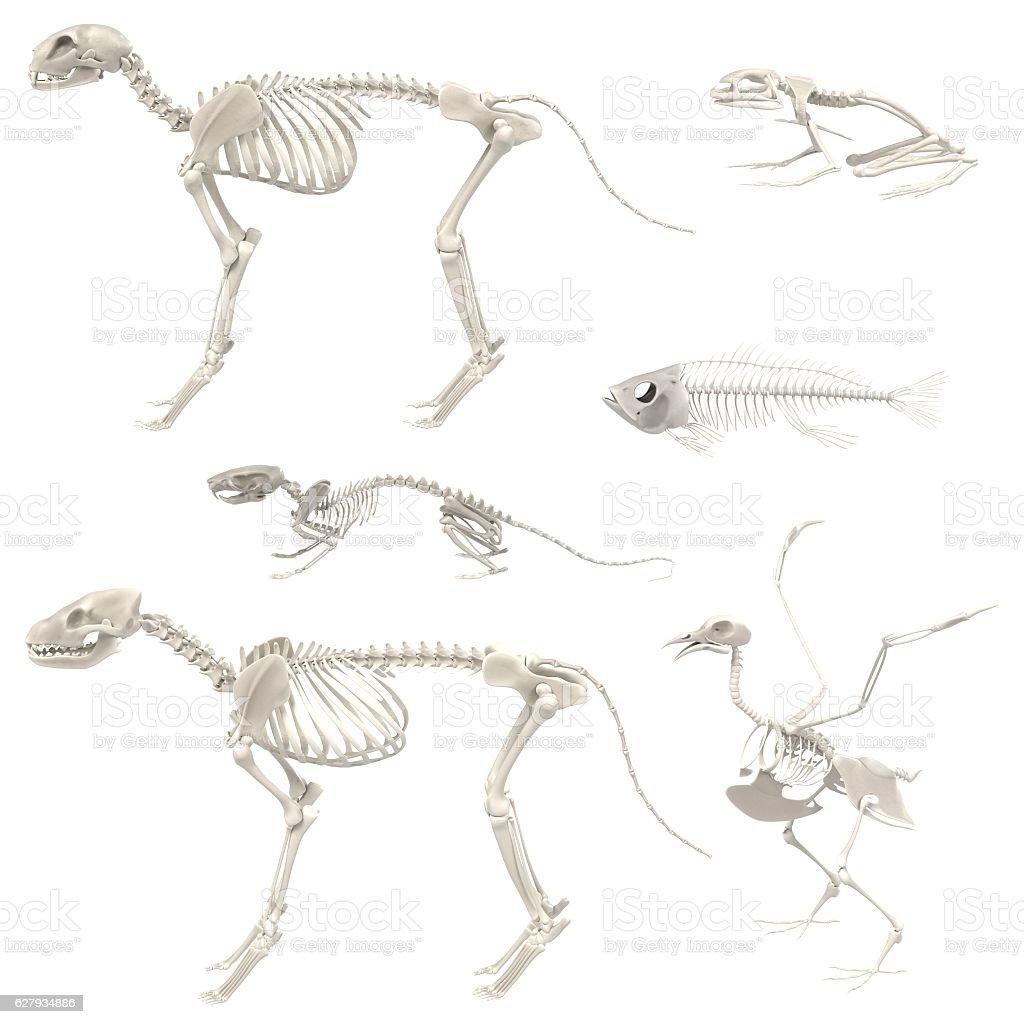 animal skeletons stock photo