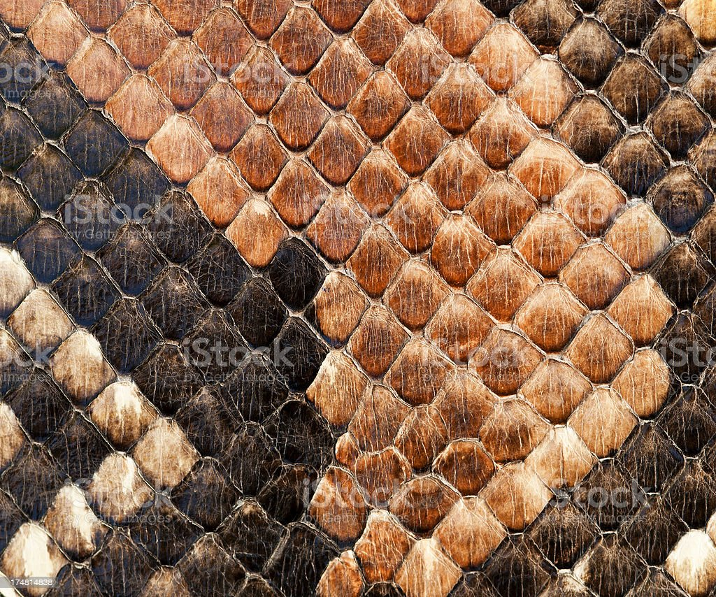 animal skin royalty-free stock photo