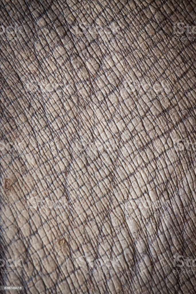animal skin. stock photo