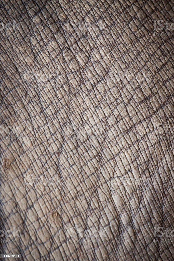 animal skin. stock photo