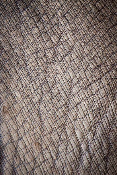 animal skin. - tiger fur stock photos and pictures