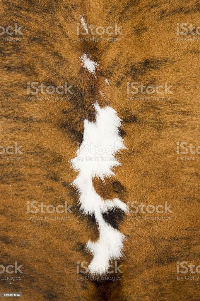 Animal Skin Texture royalty-free stock photo