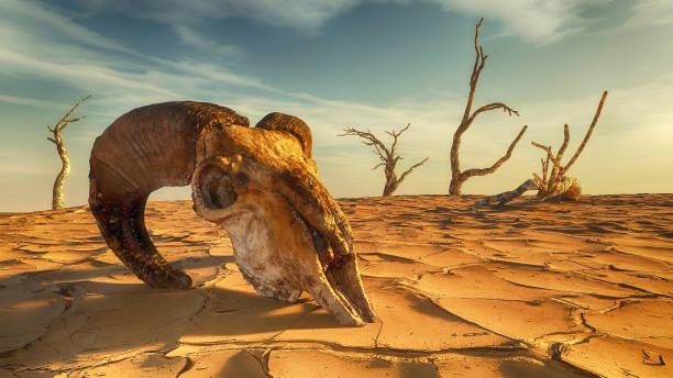 Animal skull on dry land desert landscape . This is a 3d render illustration . stock photo