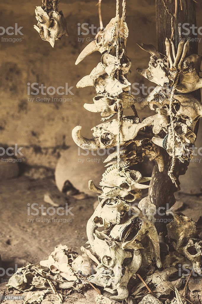 Animal skulls at voodoo place. stock photo