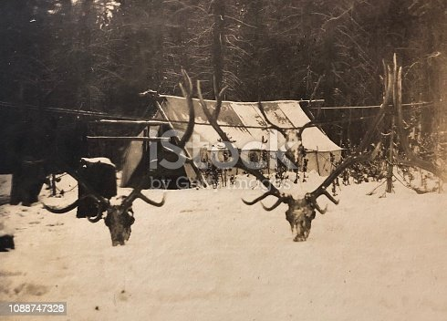 Enormous Stag Horn Display outside an early Hunting Camp, c1900.