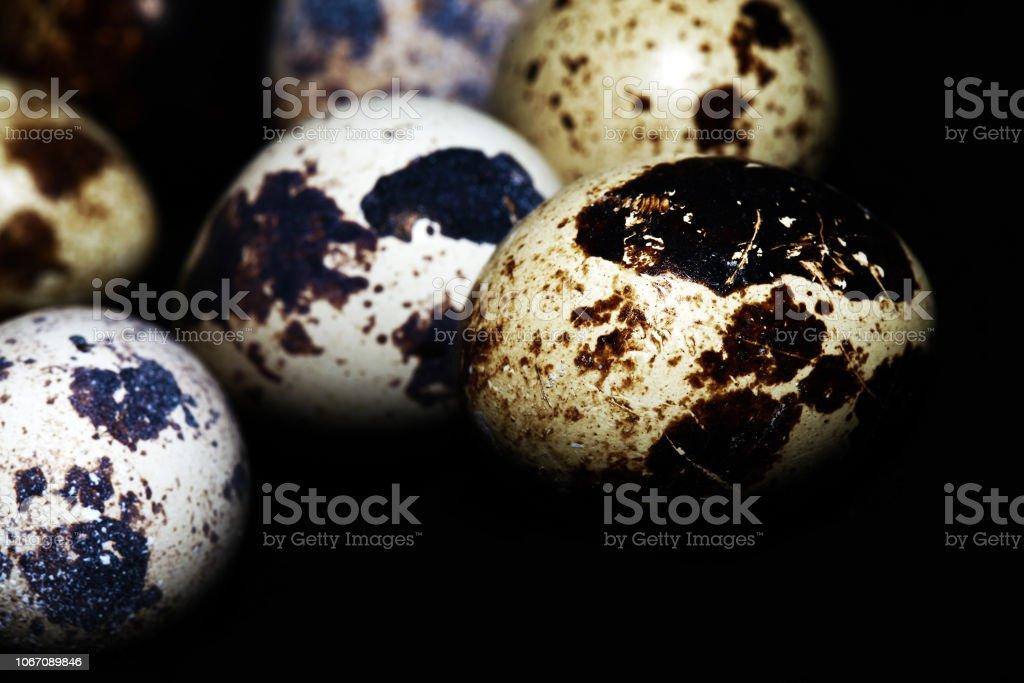 Animal Small Bird Egg Food good for health