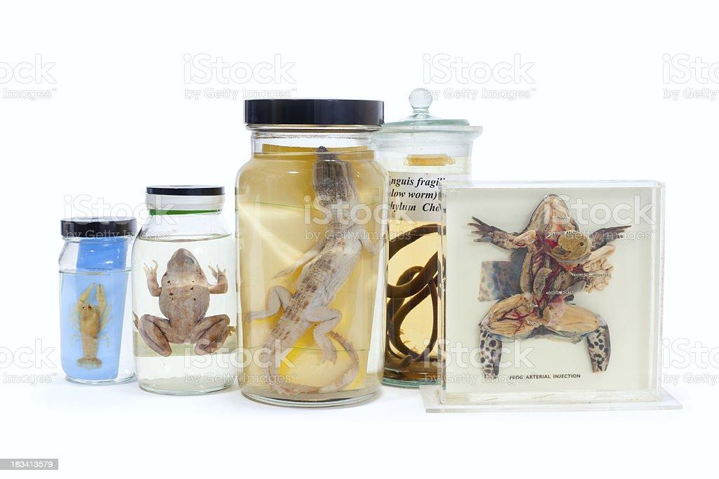 Animal specimens stock photo