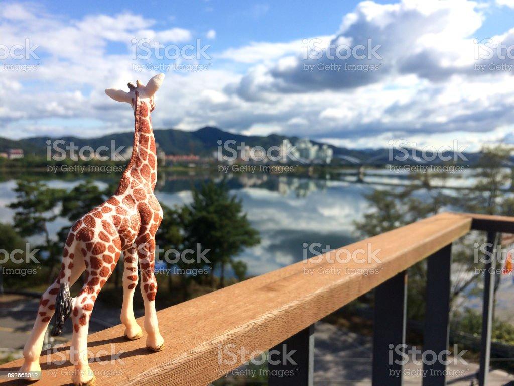 animal themes stock photo