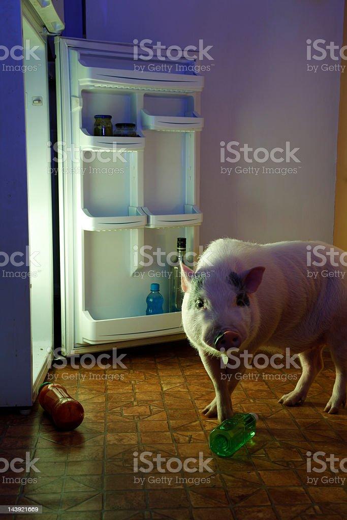 Animal thief - pig and refrigerator stock photo