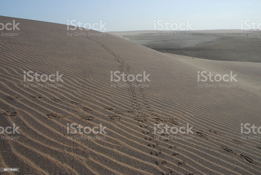 Animal tracks criss-crossing dunes royalty-free stock photo