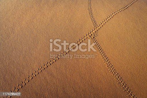 Animal Tracks on Sand, Erg Chebbi Desert, Morocco, North Africa,Nikon D3x