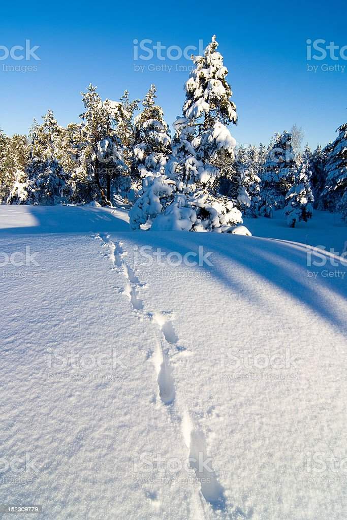 Animal tracks on the snow royalty-free stock photo