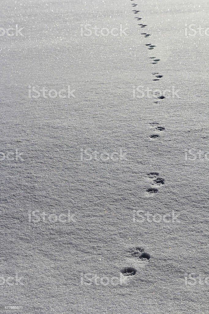 animal tracks stock photo