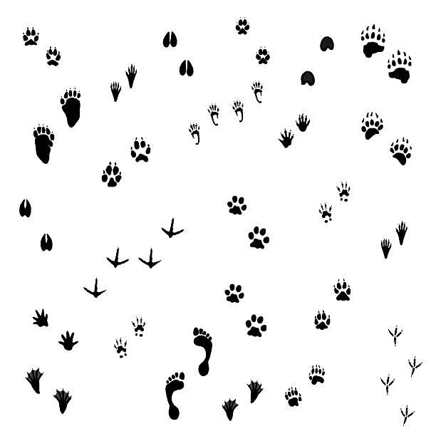 Animal tracks picture id489038798?b=1&k=6&m=489038798&s=612x612&w=0&h=guovgjabzrrcctrmcyiashaptpz8g3muilpnp hd7gu=