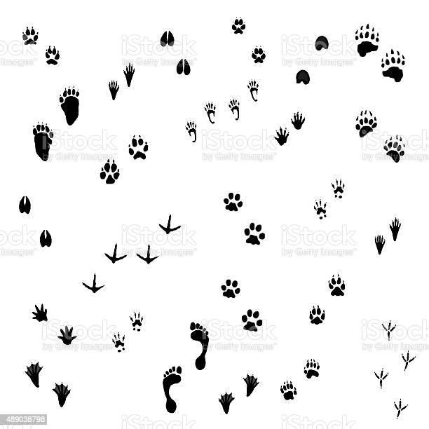 Photo of Animal Tracks